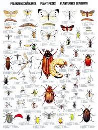 Garden Insect Pest Identification Websites Hilton Garden Grove