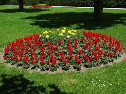 Annual flower beds can provide brilliant color all summer.