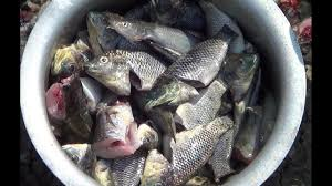 Village Style Cooking of Fish Recipes ...