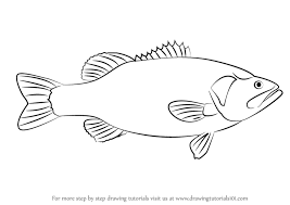 bass fish drawing step by step. Brilliant Step How To Draw A Largemouth Bass Step 1 For Bass Fish Drawing By