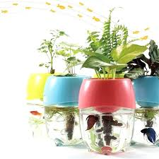 Small plant for office desk Air Purifying Small Desk Plants Office Desk Plants Fish Tanks Cbr Monaco Small Desk Plants Small Office Plant Office Desk Plant Small Plant