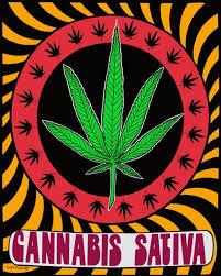 vans weed amazon