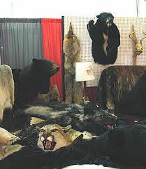 wildlife rugs