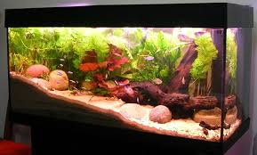 How To Feng Shui Your Fish Aquarium For Abundance 5 Factors
