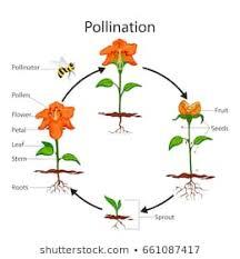 Pollination Images Stock Photos Vectors Shutterstock