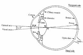 Lying Eye Chart Eyech3 I Html