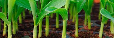 Универсальный <b>питательный грунт</b> для комнатных растений ...