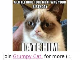 grumpy cat birthday bird. Modren Cat Birthday Cats And Grumpy Cat ALITTLE BIRD TOLD ME IT WAS YOUR BIRTHDAY Inside Cat Birthday Bird Y