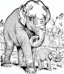 High Tech Wild Animal Coloring Pages The Truth About 5 Nice For Kids