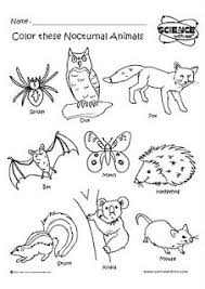 nocturnal animals coloring pages. Contemporary Coloring Nocturnal Animals Coloring Sheets On Animals Coloring Pages Pinterest