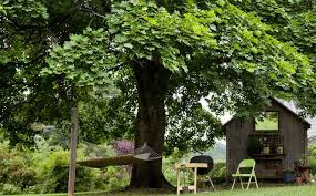 Do Up Your Exterior By Using Astonishing Good Trees For Privacy Good Trees For Backyard