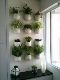 stylish kitchen wall herb garden and best 25 kitchen herbs ideas on home design indoor herbs