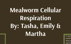 Mealworm Size Chart Mealworms Respiration By Emily Cayton On Prezi