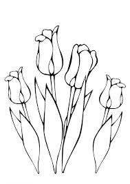 Kleurplaat Tulpen Kids N Fun Bloemen Tekenen Tulpen Kleurplaten