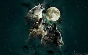 black wolf howling wallpaper. Perfect Wolf To Black Wolf Howling Wallpaper O