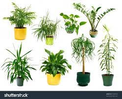 cool house plants types jpg cactus identification identify indoor house plants types