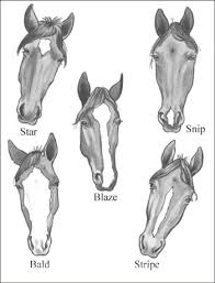 Identifying Horse Parts And Markings Dummies
