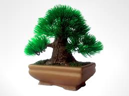 office bonsai. Office Bonsai