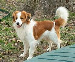 cute big dog breeds pictures and names