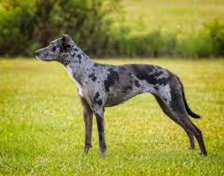 Virtual Leash ® profile for Pearl/Tucker   Dog Tag Art