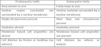 Prokaryotic And Eukaryotic Cells Chart Eukaryotic And Prokaryotic Cells Kaleahrvhs Weebly Com
