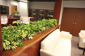 office greenery. u201cour office plant care has been in the good hands of envirogreenery plants since august 2006 terry and his team are very knowledgeable reliable greenery