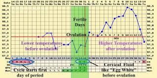 Bbt Chart Longevity Acupuncture Miami Fl Womens Natural