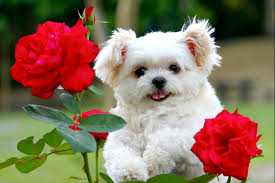 cute dog wallpaper desktop. Fine Dog Desktop Cute And Funny Pics Of Dogs Puppies Download Inside Cute Dog Wallpaper Desktop A
