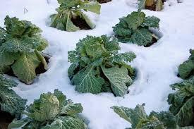 Nc Seasonal Produce Chart Central North Carolina Planting Calendar For Annual