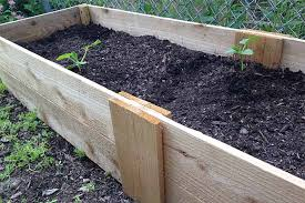a wooden garden planter box filled with brown soil with a few green seedlings growing