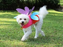 19 diy pet costumes for