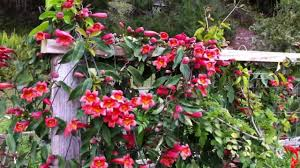 hummingbird garden. Perfect Garden Hummingbird Garden March 2012 To H
