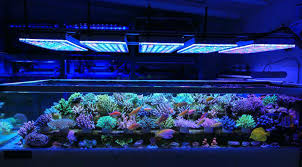 full image for reef aquarium lighting guide large size of fish tank incredible aquarium lighting pictures