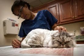 """Résultat de recherche d'images pour """"cat care"""""""