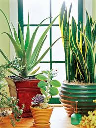 houseplants you can t kill
