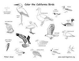 Small Picture California Habitats Mammals Birds Amphibians Reptiles