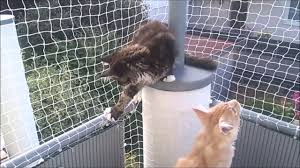 Katzengitter Balkon Test Vergleich Jul 2019 Video