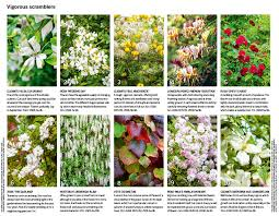 Best 25 Climber Plants Ideas On Pinterest  Flower Vines Flowers Wall Climbing Plants For Shade