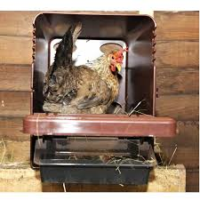 hen using the box nesting box