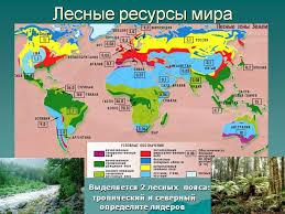 Реферат Лесные ресурсы Гипермаркет знаний Лесные ресурсы