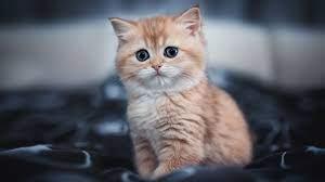 1920x1080 Cute Kitten 4k Laptop Full HD ...