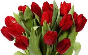 Bildergebnis f?r тюльпаны фото