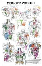 Image Result For Hijama Points Chart Pdf