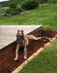 mulch and pet safety tips on how to keep mulch safe for pets