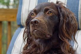 the best hunting dog breeds