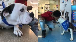 <b>Man</b> Denied <b>Pit Bull</b> Adoption Over Breed Ban Finds Another Furry ...