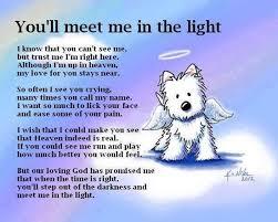 Bereavement Quotes Amazing Pet Bereavement Quote Quote Number 48 Picture Quotes