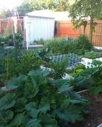 garden of vegetables in florida