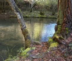 Bear Creek Landscapes Design Bear Creek In Garden Valley Ca Garden Peaceful Places