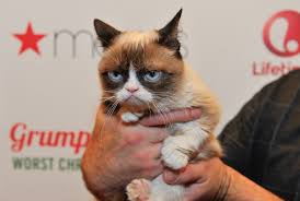 grumpy cat so beautiful. Modren Beautiful How To Make Your Cat Internet Famous In 8 Simple Steps Because It Deserves  The Spotlight And Grumpy So Beautiful U